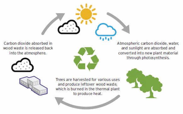 Biomass and CO2 Cycle