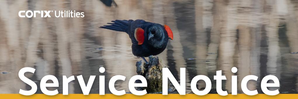 lindell-red-winged-blackbird-b