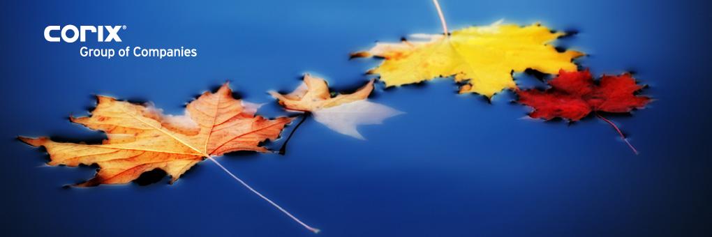 blog-banner-fall-leaves