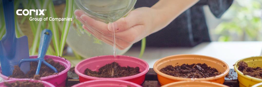 blog-banner-watering-seedlings